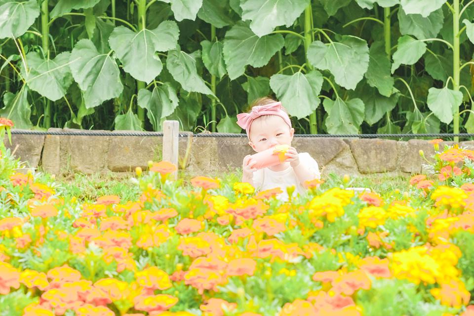 大阪の出張撮影カメラマンの鶴見緑地公園カメラ教室ひまわり撮影会