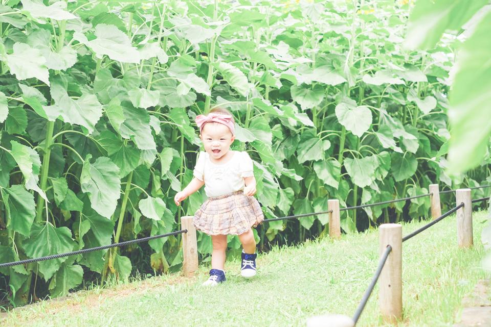 大阪の出張撮影サービスの鶴見緑地公園カメラ教室ひまわり撮影会