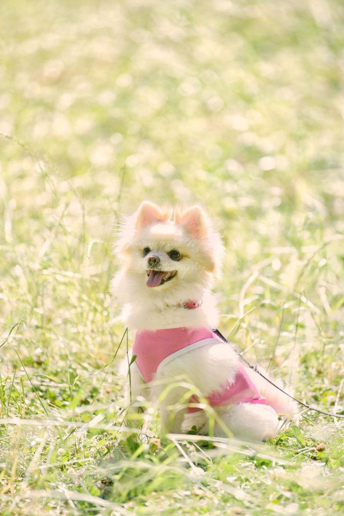 鶴見緑地公園ペット写真撮影家族写真紫陽花出張撮影会